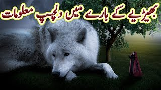 Wolf, The Unsung warrior, Full information | Urdu Documentary | Factical | Science and Technology