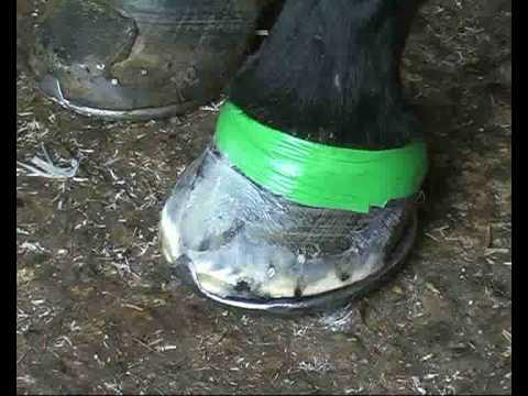 Horse Hoof Crack Repair