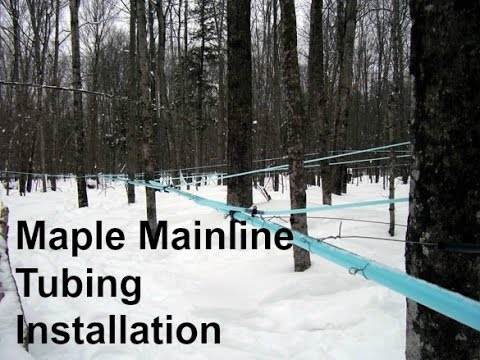 Maple Mainline Tubing Installation