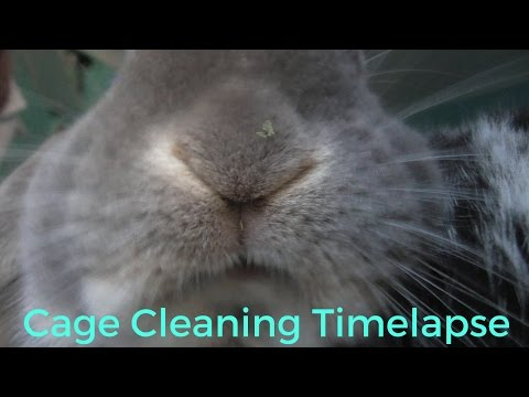 cage clean (time-lapse)