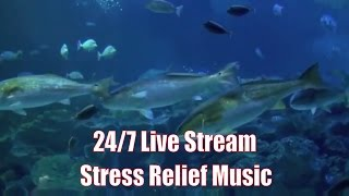 Uplifting Instrumental Music: Easy Listening Stress Relief 24/7 Live Stream Positive Energy Music