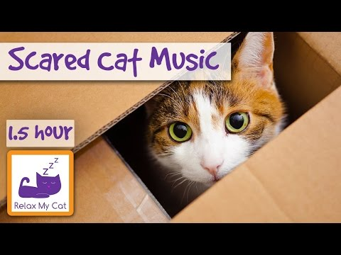 Soothing Music for Scared Cats - Music to Help Your Cat Relax! Soothing Music for Cats