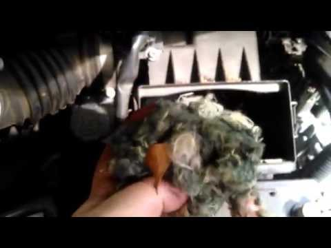 Mouse nest found in car intake air filter. Nissan Versa.
