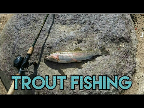 TROUT FISHING WITH POWERBAIT FROM THE RIVER BANK