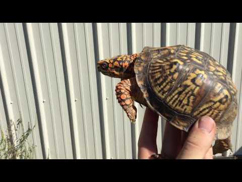 Building a Creek in my Box Turtle Pen!