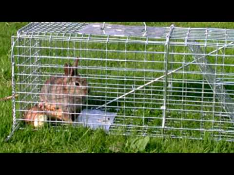 Small Pets : How to Make a Rabbit Trap