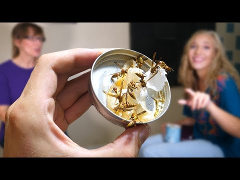 Xxx Mp4 Releasing A Wasp Nest In My House Family Reacts Keeping Wasps As Pets 3gp Sex