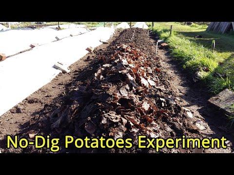 No-Dig Potatoes Experiment