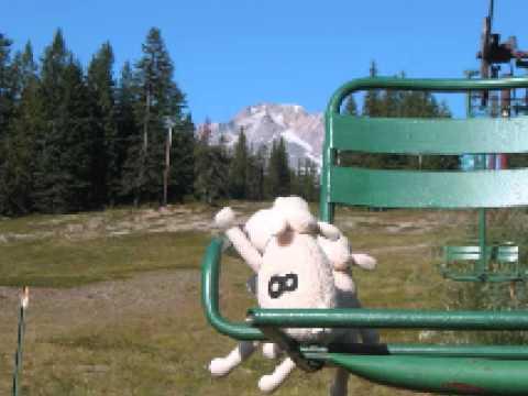 Serta sheep vacation.wmv