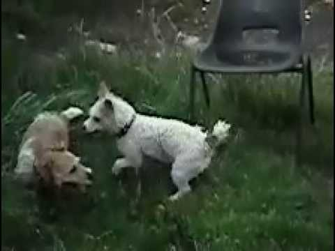 Dogs Play Fighting Slow Motion
