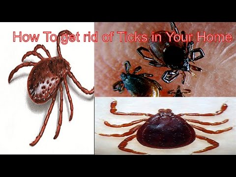 ❤❤❤How to get rid of Ticks in your home || Insects Life❤❤❤
