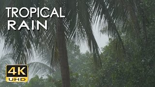 Download 4K Tropical Rain & Relaxing Nature Sounds - Ultra HD Nature - Sleep/ Relax/ Study/ Meditate Video