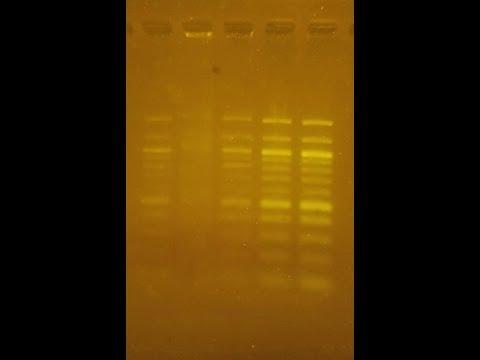 DIY Transilluminator for DNA gels