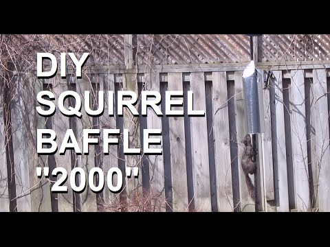 DIY Squirrel baffle: Simple and effective