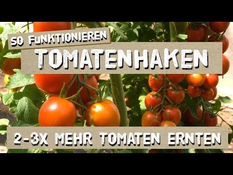 So funktionieren Tomatenhaken - Tutorial