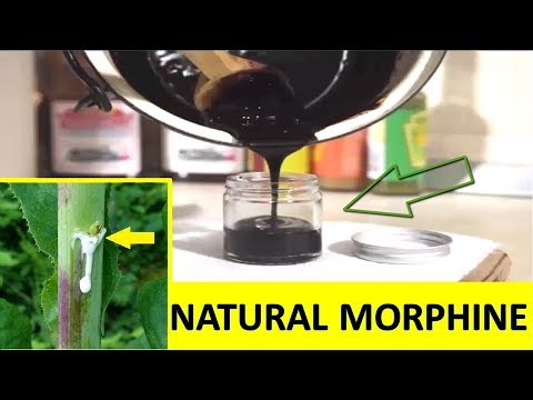 How to Make Natural Morphine Using this Painkiller Plant