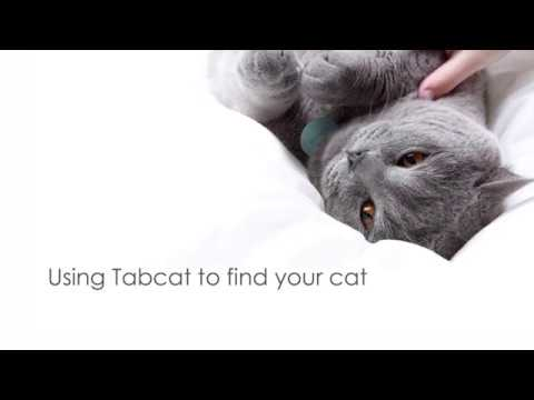 Using Tabcat to find your cat