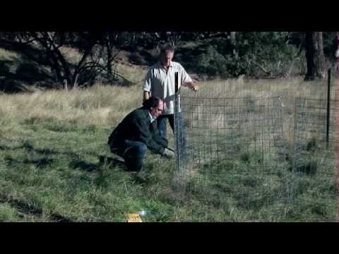 Trapping for feral pig control