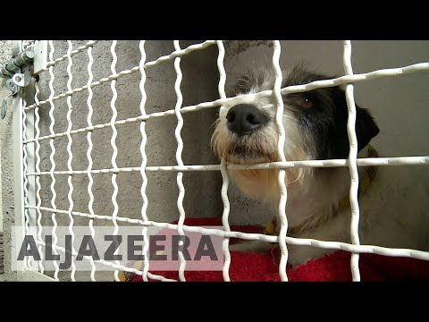 Street dogs, unwanted in Mexico, find a new home in Canada