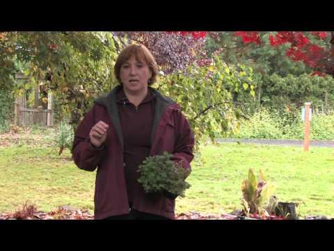 Garden Maintenance : How to Repel Flies Naturally