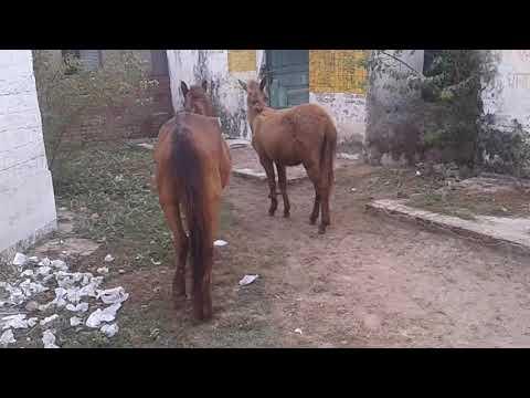 Xxx Mp4 Hours Sex Video घोड़ी घोडन की चुदाई Video 3gp Sex