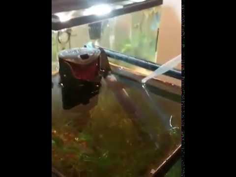 Brine shrinp hatching in my diy brine shrimp hatchery
