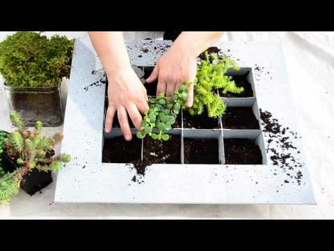 Succulent Wall Planter || West Coast Gardens