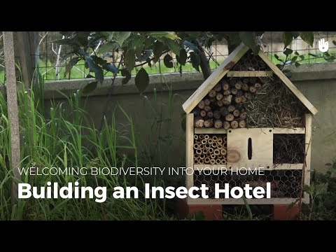 Building a Bug Hotel | Biodiversity