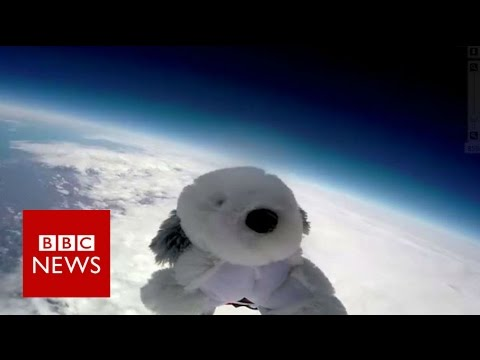 Toy dog 'Sam' missing after being launched to edge of space - BBC News