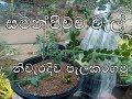Download සමන්පිච්ච වැල් පැලකිරිම ,samanpichcha wel paelakirima ,jasmin planting MP3,3GP,MP4