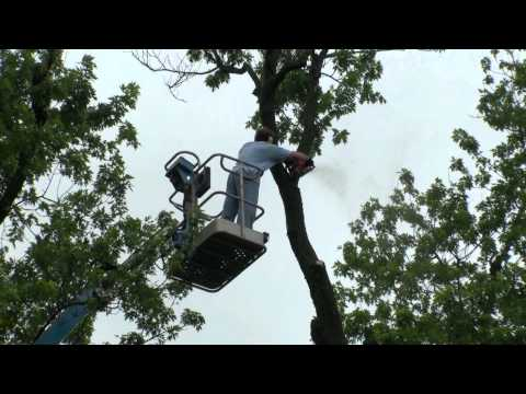 How to take down a tree near a house using a lift.