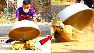 Aluminum Box vs Prank Dog Very Funny - Must Watch Funny Comedy New Prank With Try To Stop Laugh