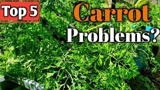 Top 5 Reasons Why You're Having Trouble Growing Carrots- Plus Bonus Tip!