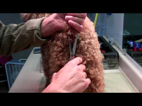 Trimming dogs anal hair