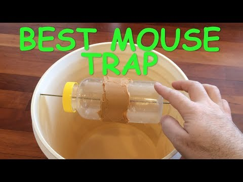 Best Mouse Trap Ever - Mice Trap Catches dozens of mice alive without having to reset trap
