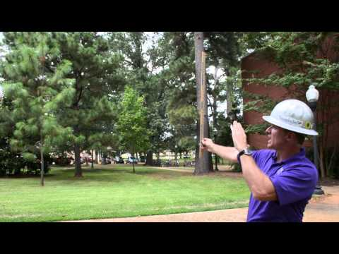 How to measure the height of a tree