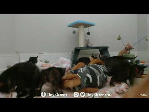Kittens gone WILD!  TinyKittens.com