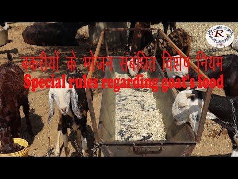 बकरी के भोजन संबंधित विशेष नियम, Special rules regarding goat's food