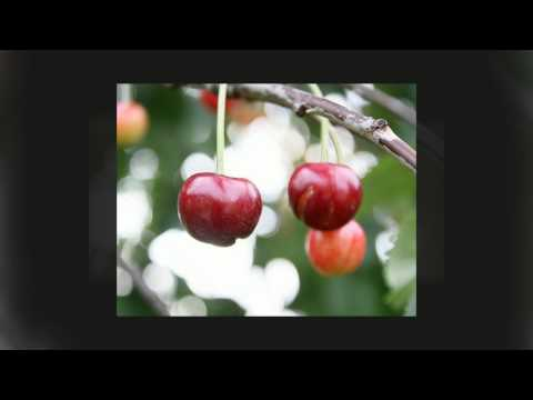 Cherry Juice and Gout Pain