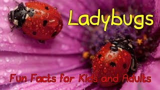 Amazing Facts About Ladybugs - Fun Facts for Kids and Adults!
