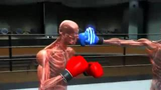 Speed Boxing Punch