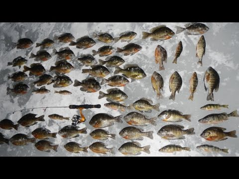 Vlog #9: 2017 Ice Fishing for Bluegill and Other Panfish