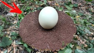 EXPERIMENT: 25 000 MATCHES vs OSTRICH EGG