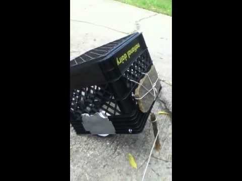 How to make a simple squirrel trap