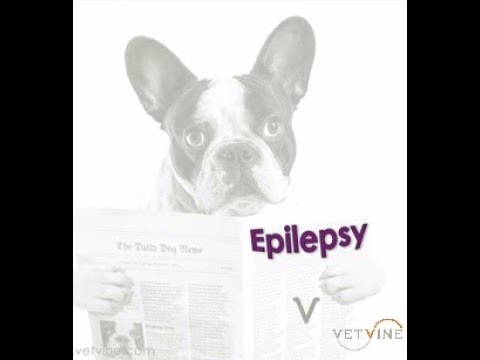 Canine Epilepsy - What's New