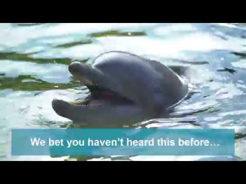 Dolphin Vocalizations | Discovery Cove