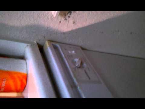 Ants in Jon's apartment