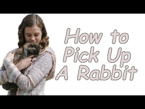 How to Pick Up and Hold a Rabbit