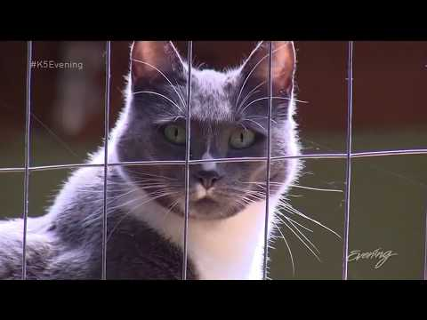 Catios bring the outdoor life to indoor cats | KING 5's Evening
