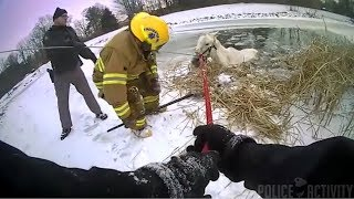 Deputies And Firefighters Rescue Horse From Frozen Pond